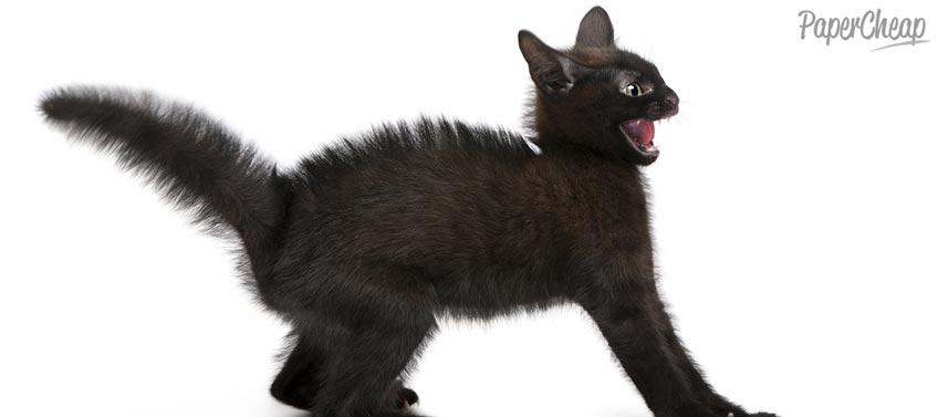 Angry Black Kitten