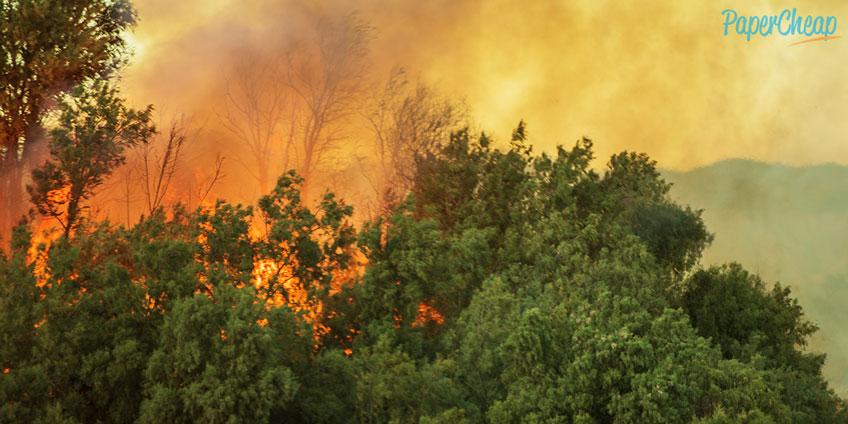 Blaze in Forest